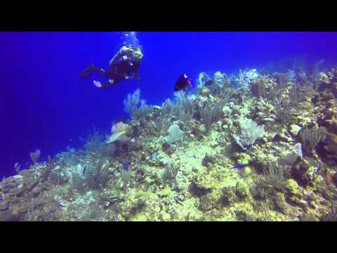 Feb 2014 - Scuba Diving Roatan, Honduras