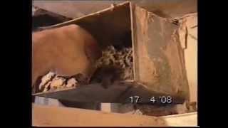 Демонтаж шиферной (ацеид) сантехкабины www.remsanteh.ru(, 2015-05-30T00:25:56.000Z)