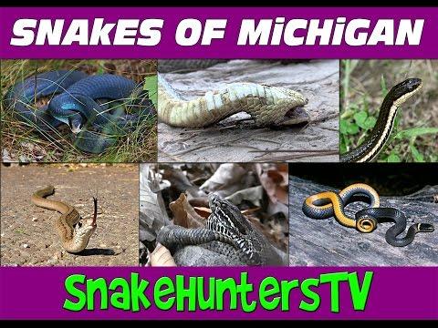 Snakes Of Michigan - SnakeHuntersTV