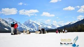 Snowy Owl Sled Dog Tours Promotion Movie