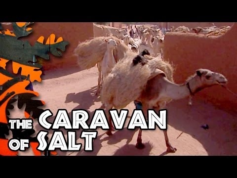 The caravan of salt
