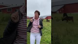 VACHES et FROMAGE des ILES DE LA MADELEINE - Le garde manger d'Hélène (7)