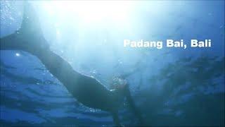 バリ島,パダンバイはダイビングもシュノーケルも楽しめる場所!サヌー...