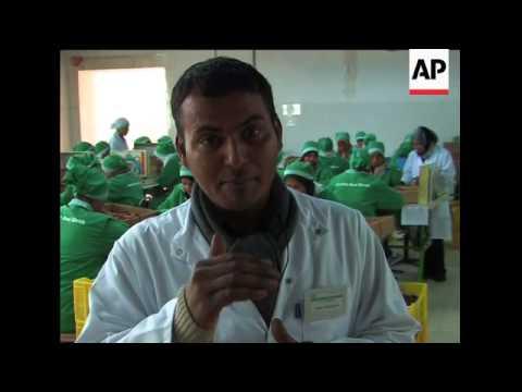 Tunisia''s Deglet Nour date industry