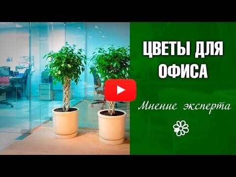 Цветы для офиса 🌺 озеленяем пространство c HitsadTV