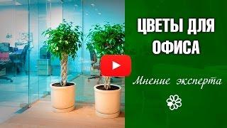 видео Оформление офисных помещений