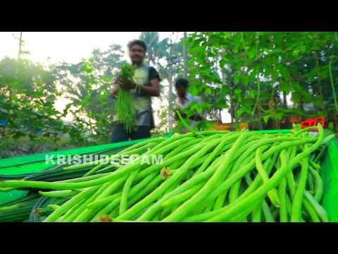 Munthiri krishi funnydog tv for Terrace krishi