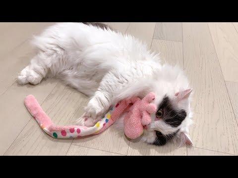 순둥이 고양이가 세상 짜증내는 법