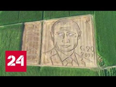 Путин на поле конопли проросшее семя конопли ростком