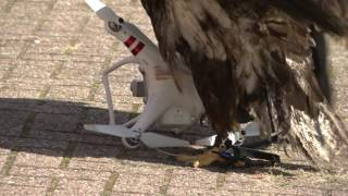 Eagles vs Drones