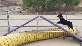 Santa Clarita Dog Agility Club