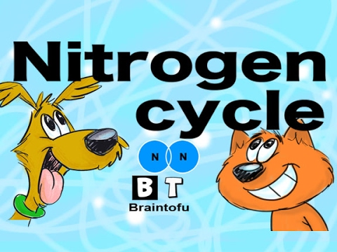 Nitrogen Cycle Made Easy Biology For Kids Fun Science Cartoon