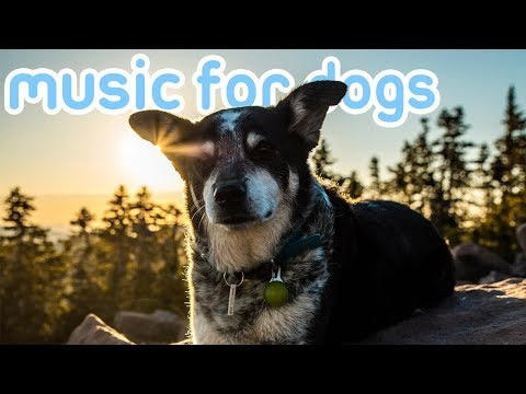15 HOURS of Dog and Puppy Sleep Music! Lullabies to Relax Your Dog!