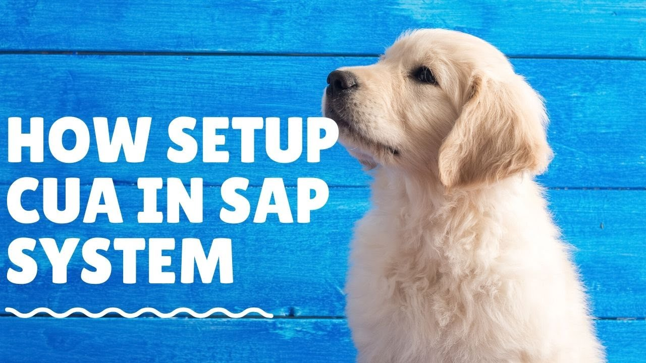 SAP Security Training How to Setup CUA in SAP System - YouTube