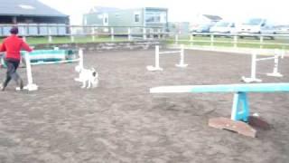 Deaf Dog Horus Agility Training 25/01/09 Run 3