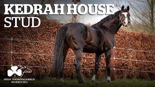 ITM Irish Stallion Showcase 2021 - Kedrah House Stud