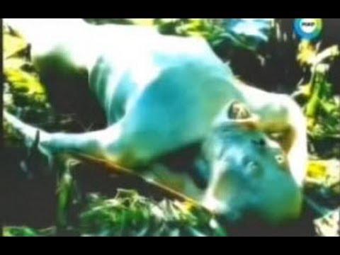 Русалка попала в сеть в море видео