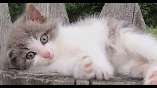 Милые и забавные животные Позитив Создай себе хорошее настроение