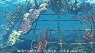 eREEF 2017 - User Interface Artificial Coral Reef