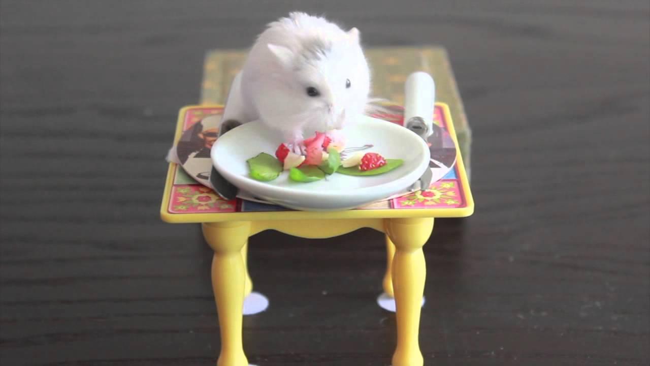 Hamsters Eating Tiny Food