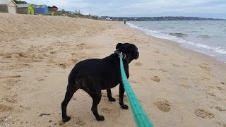 Your Pet, Our City – Responsible dog walking in Frankston City