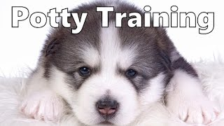 How To Potty Train An Alaskan Malamute Puppy - Alaskan Malamute Training - Alaskan Malamute Puppies