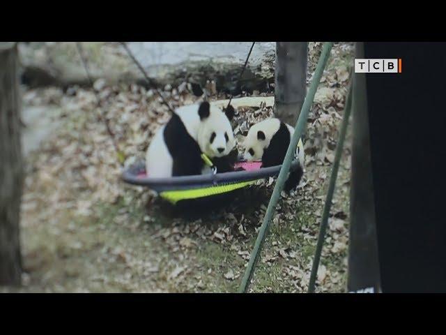 Как посмотреть на панд в режиме реального времени