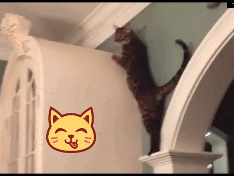 So close and yet...so far - Crazy Cats Jumping Fails