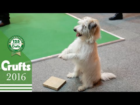 Amazing Stunt Dogs | Crufts 2016