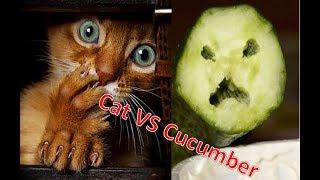 Подборка смешных котов против огурцов