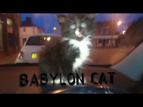 Kitten dance – do the cat dance cute kitty, Babylon cat