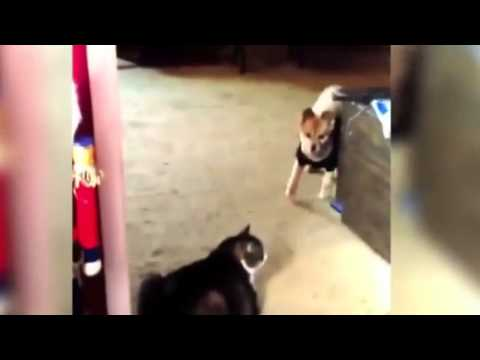 Funny Dogs Scared of Cats Compilation 2013 NEW HD 5