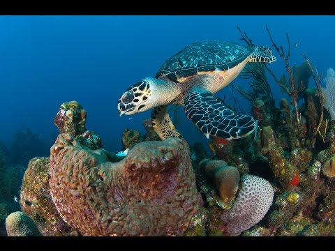 BEST DIVING adventures in Roatan