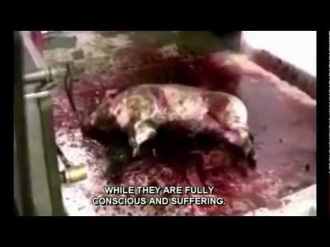 Animal Abuse. Warning:Extremely Disturbing. Farm to Fridge short w/subtitles See MercyForAnimals.org