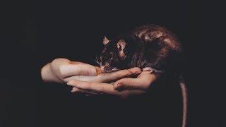 Лучший друг стал крысой