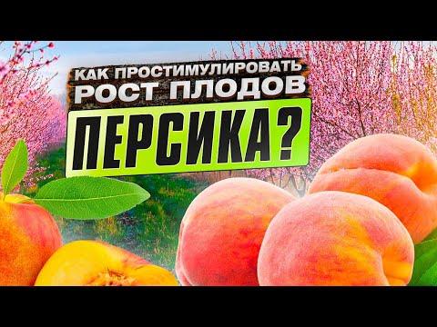 Вопрос: Почему растрескиваются плоды персика?