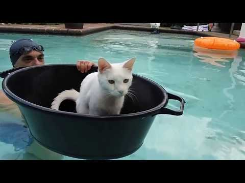 Cat in swimming pool
