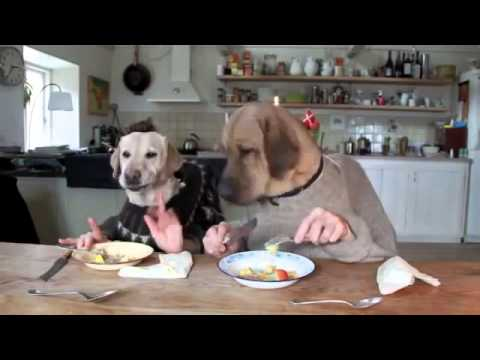 Как собака кушает