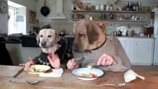 Собаки кушают руками)