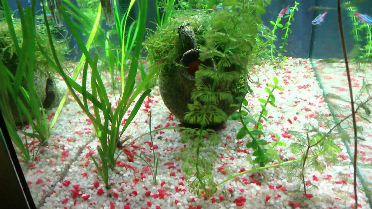 Acuario de 30 litros con peces tropicales y plantas for Temperatura para peces tropicales acuario