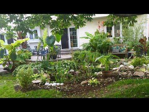 AWESOME! June Tropical Garden Tour part 1