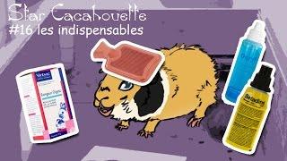 les produits indispensables pour soigner son cochon d'Inde