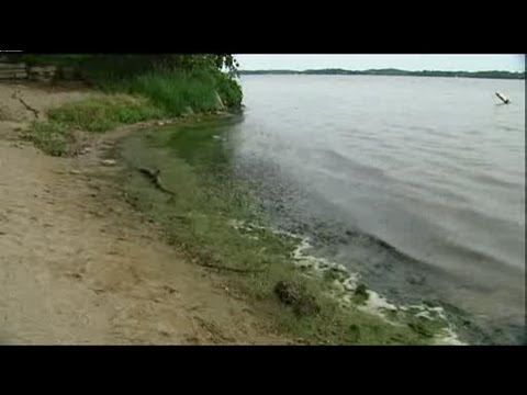 Some Wisconsin lakes have less blue-green algae this year
