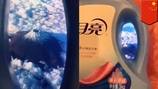 Pretending to fly: China's latest viral trend - TomoNews