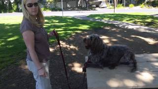 Dog Training In San Jose,ca. Canine Tutors Dog Training