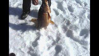 Как наловить очень много карпа зимой?Секреты зимней рыбалки!