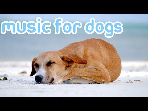 15 Hours of Deep Sleep Music to Relax You Dog! Helped 10 Million Dogs!