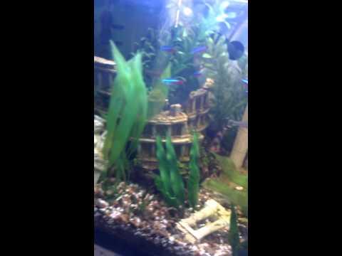 My 55 gallon Greek aquarium. Its Nice!