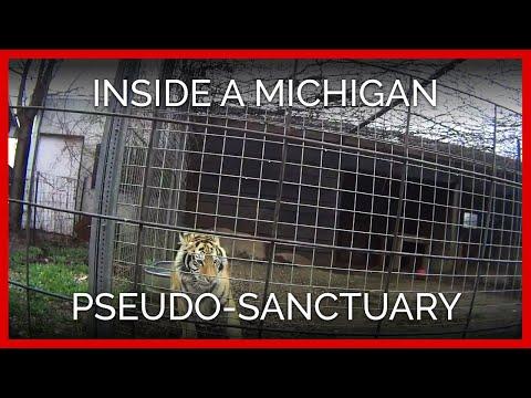 Inside a Michigan Pseudo-Sanctuary: A 2017 PETA Exposé