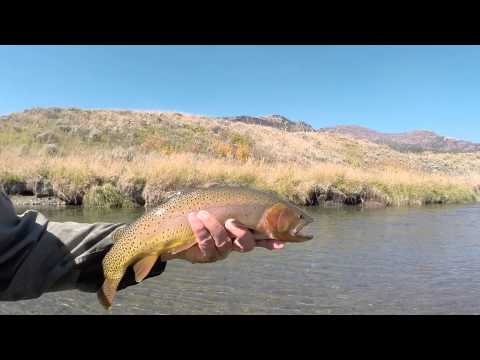 Yellowstone National Park fly fishing 2015